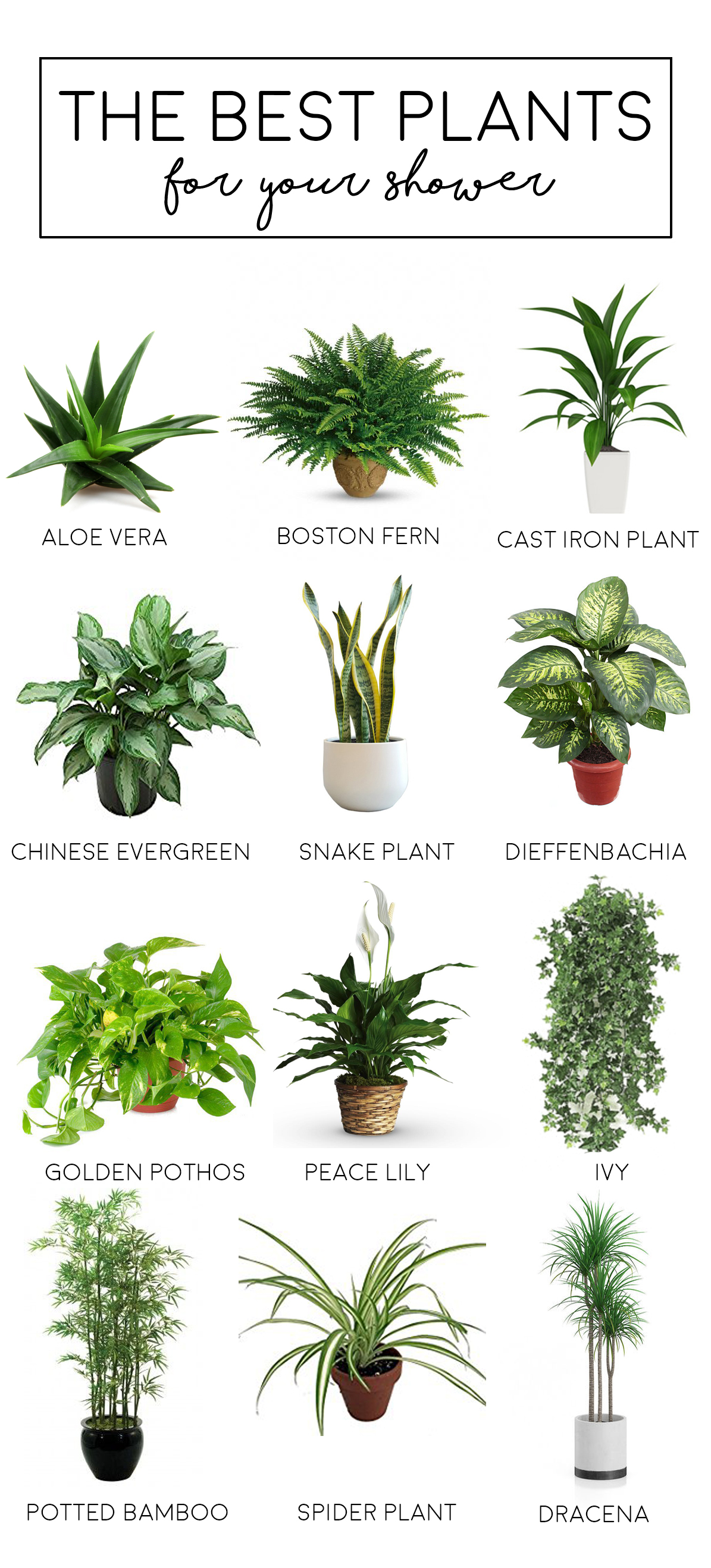 Blog for Best no maintenance plants