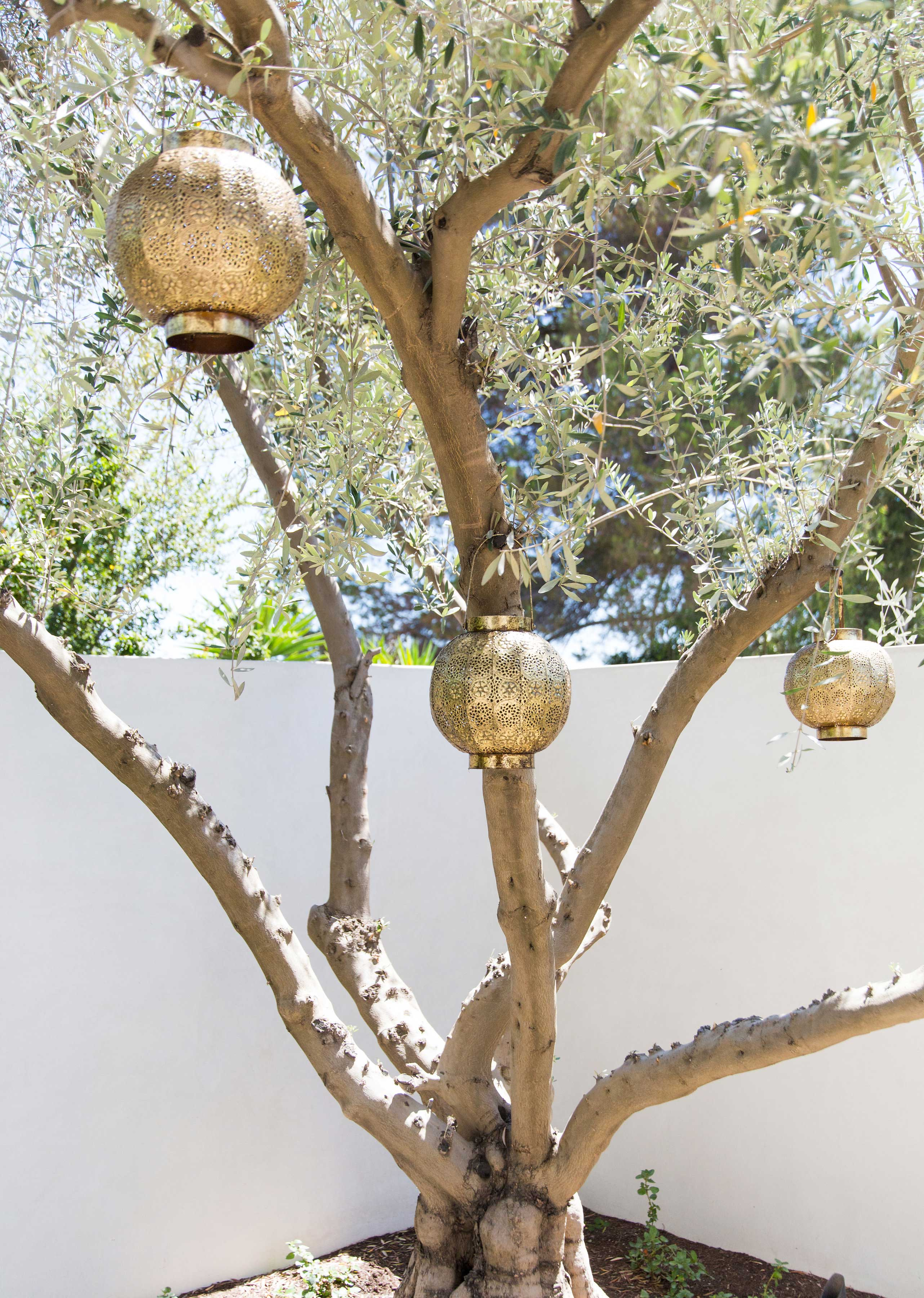 blackband_design_project_bel_air_moroccan_trees